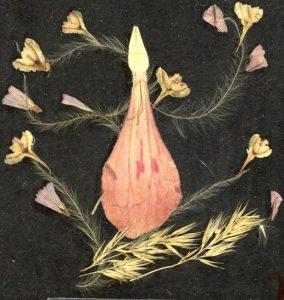 latice za izradu toMAgo slike