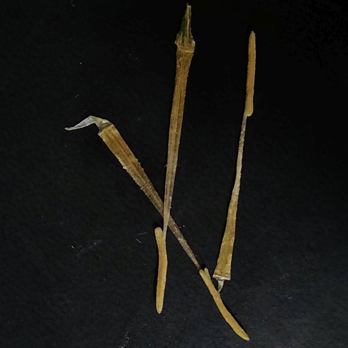 Baklja, prosti prst i bambus