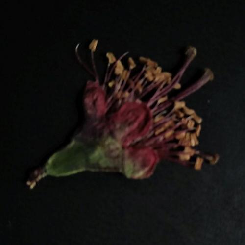 Cvijeće ispalo iz vaze